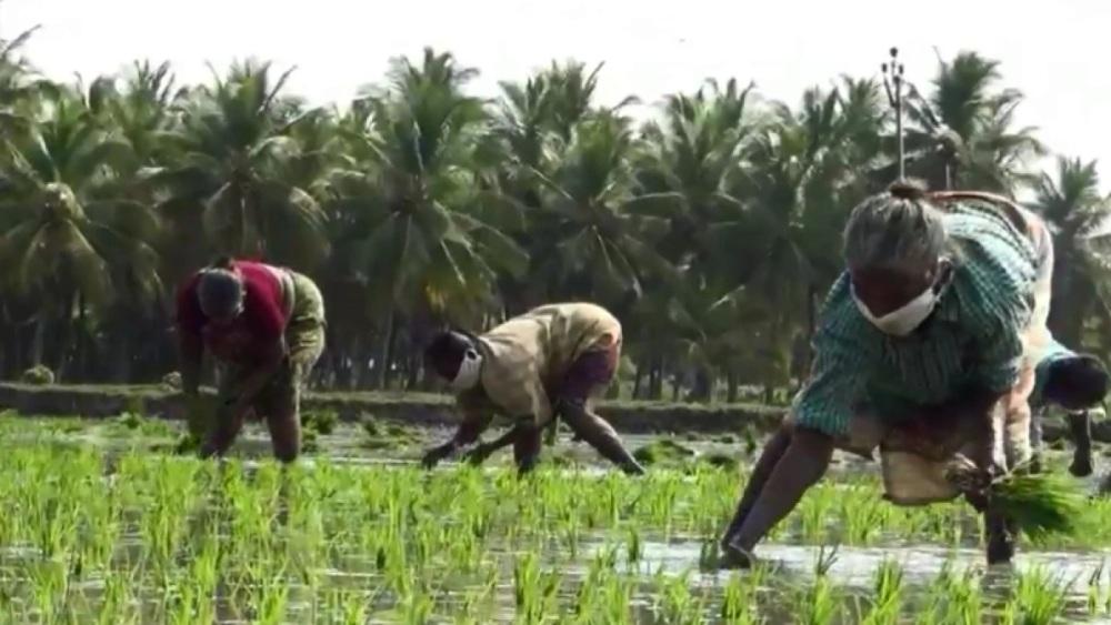 Les impacts de la COVID-19 sur la production agricole en Afrique: Manque de main-d'œuvre agricole