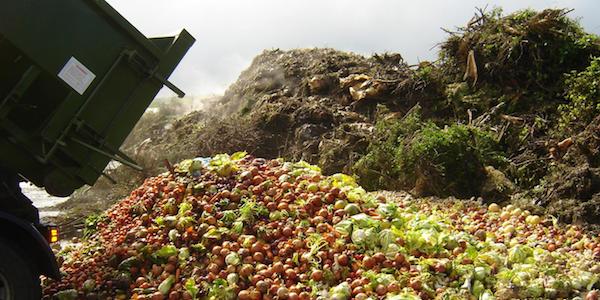 Les impacts de la COVID-19 sur la production agricole en Afrique: La gestion des ravageurs en période de pandémie