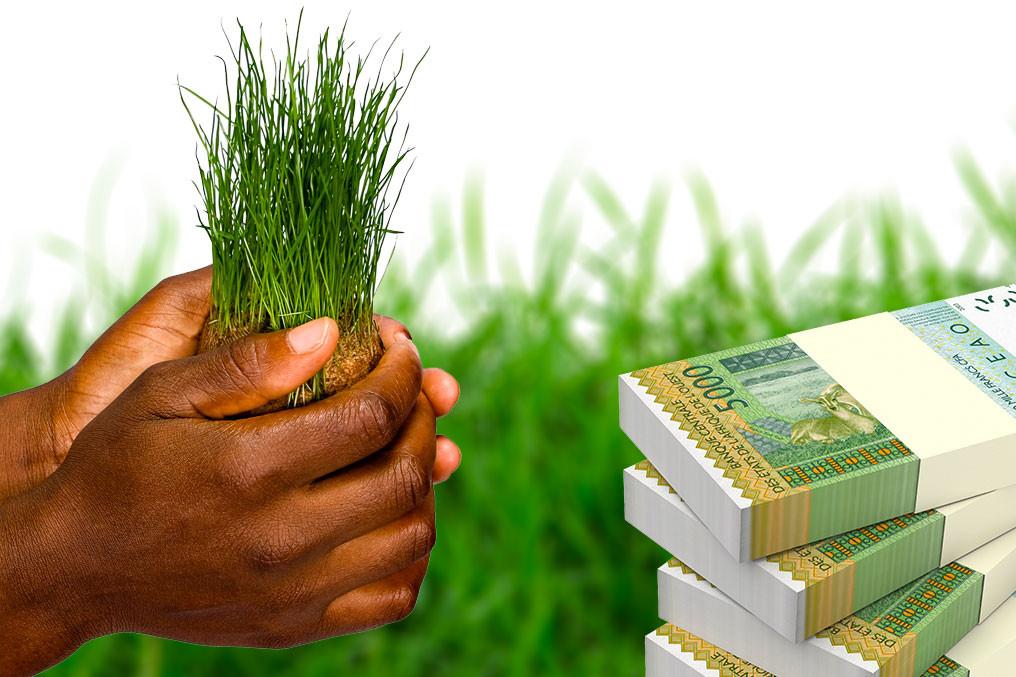 Les impacts de la COVID-19 sur la production agricole en Afrique: Le financement du secteur agricole
