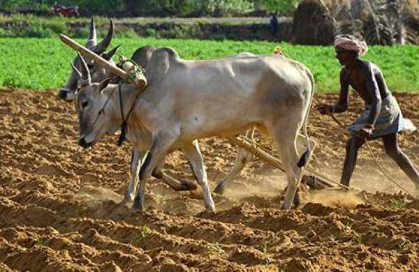 Et si le contexte de COVID-19 offrait plutôt à l'agriculture vivrière ouest-africaine des opportunités pour se développer?