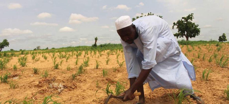 Financement agricole: De plus en plus d'engagement du secteur bancaire dans l'agriculture au Nigeria