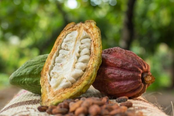 [Chronique] Les matières premières agricoles: Le cacao au 11 juin 2020