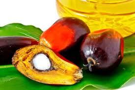 [Chronique] Les matières premières agricoles: L'huile de palme au 11 juin 2020