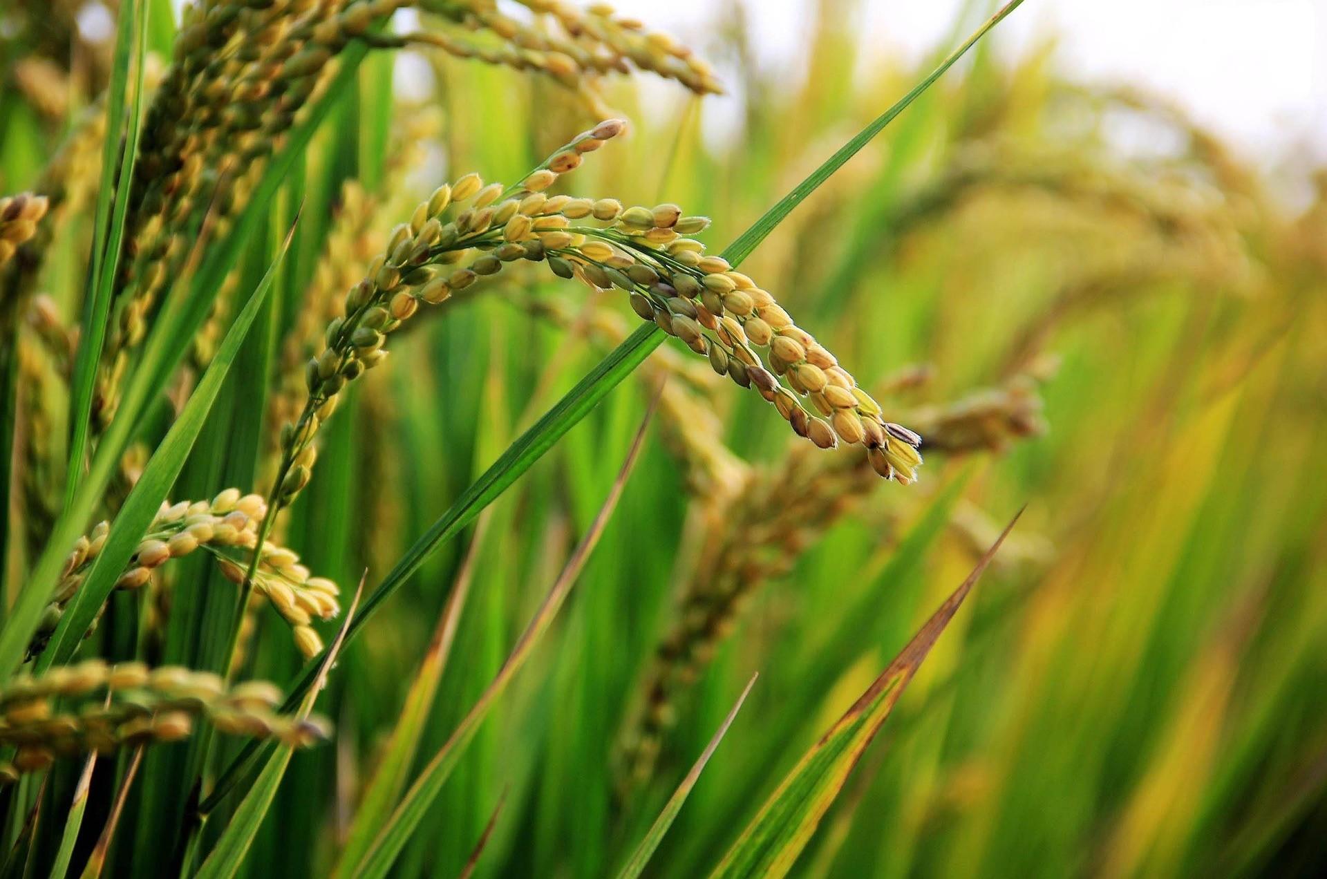 La beauté de l'agriculture