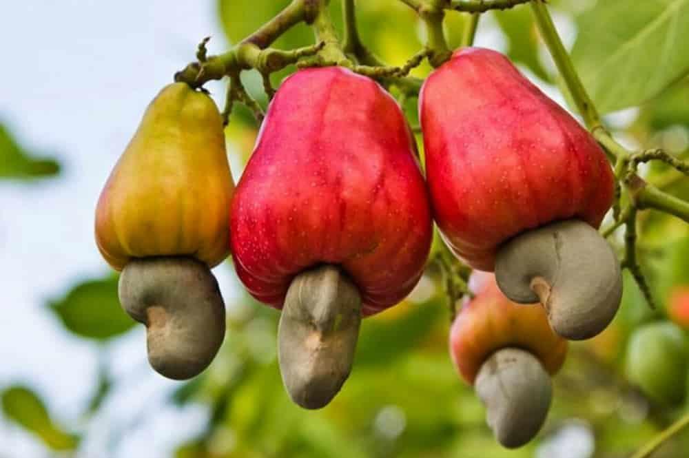 Pomme et noix de cajou