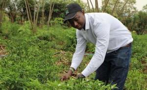Financement agricole