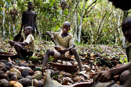 Les plantations de cacao
