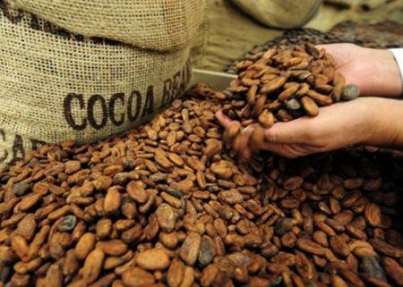 Cacao-café