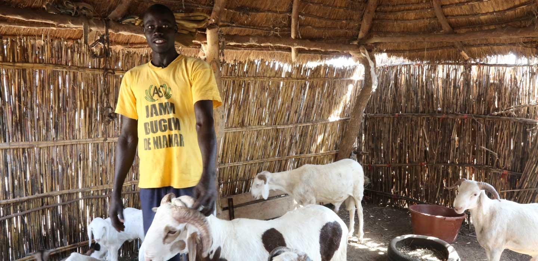 Financement agripreneur: Avec $93,3 millions, le FIDA et le gouvernement sénégalais veulent mettre en œuvre le Projet Agri-jeunes Tekki Ndawñi.