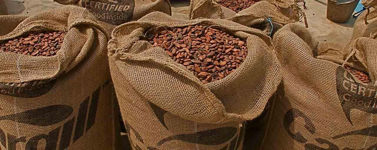 Investissement: Le géant américain Cargill confirme ses investissements dans le cacao ivoirien