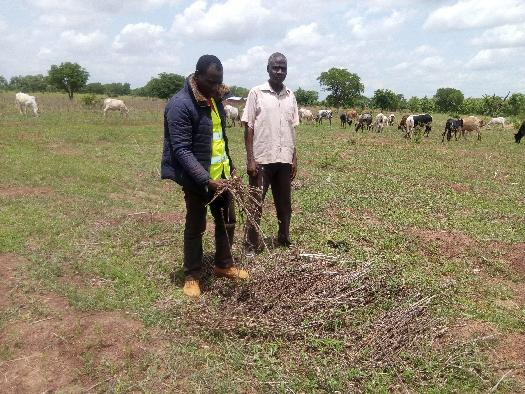 Soycain- Togo/ Agronome Région Savane