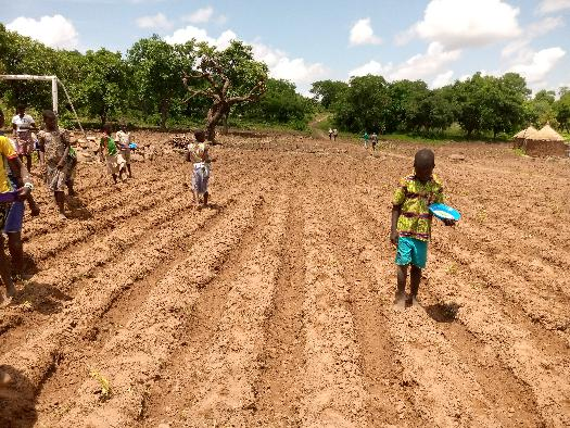 Soycain-Togo/ ATCHADE ;Agronome Savane