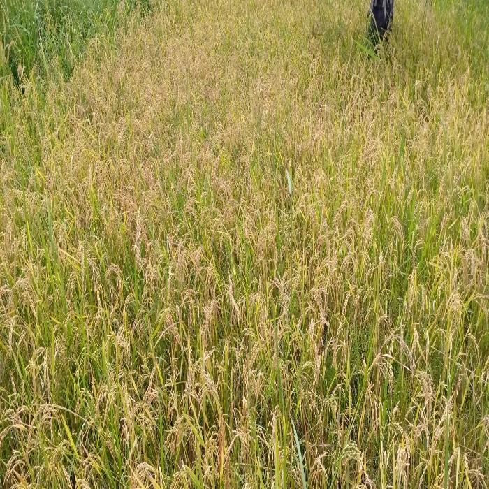 SOYCAIN-TOGO/Agronome Région Savane