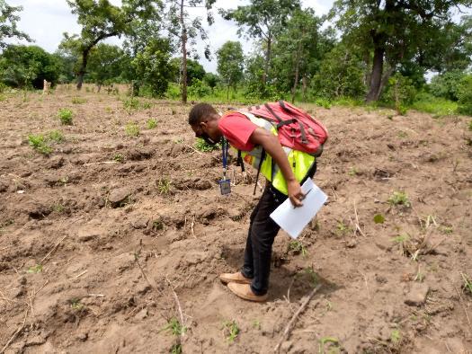 Mawussi. observation de la germination sur nos parcelles lors des Audits 1 et 2 dans la zone bassar