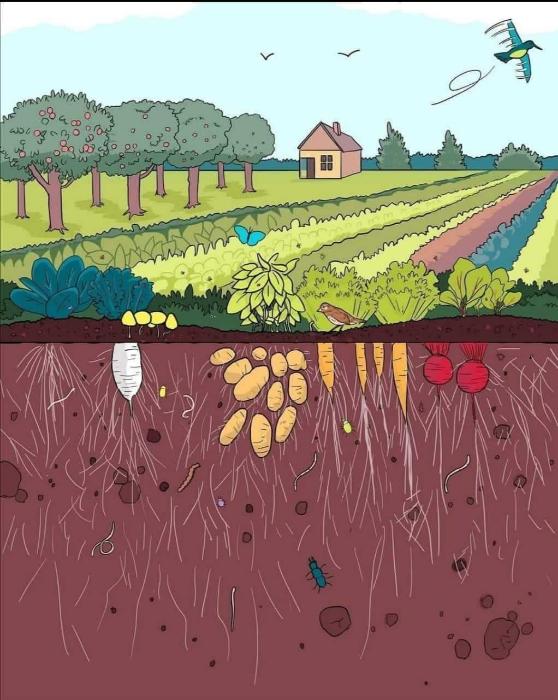 5 Décembre, Journée mondiale des sols