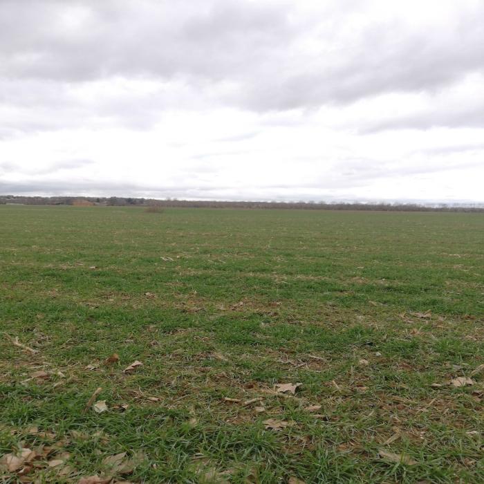 Bonjour céréales derrières culture de maïs secteur Rieux Volvestre secteur Hauge-Garoonne