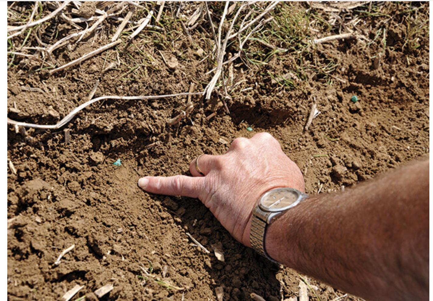 5 questions à ce poser avant de semer