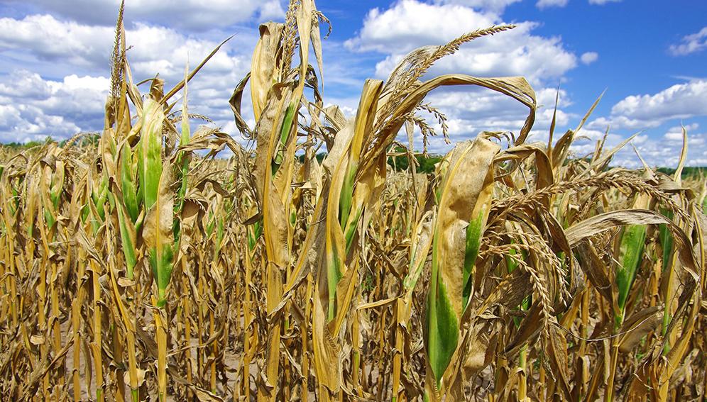 Innovation agricole pour la résilience face au changement climatique et son atténuation