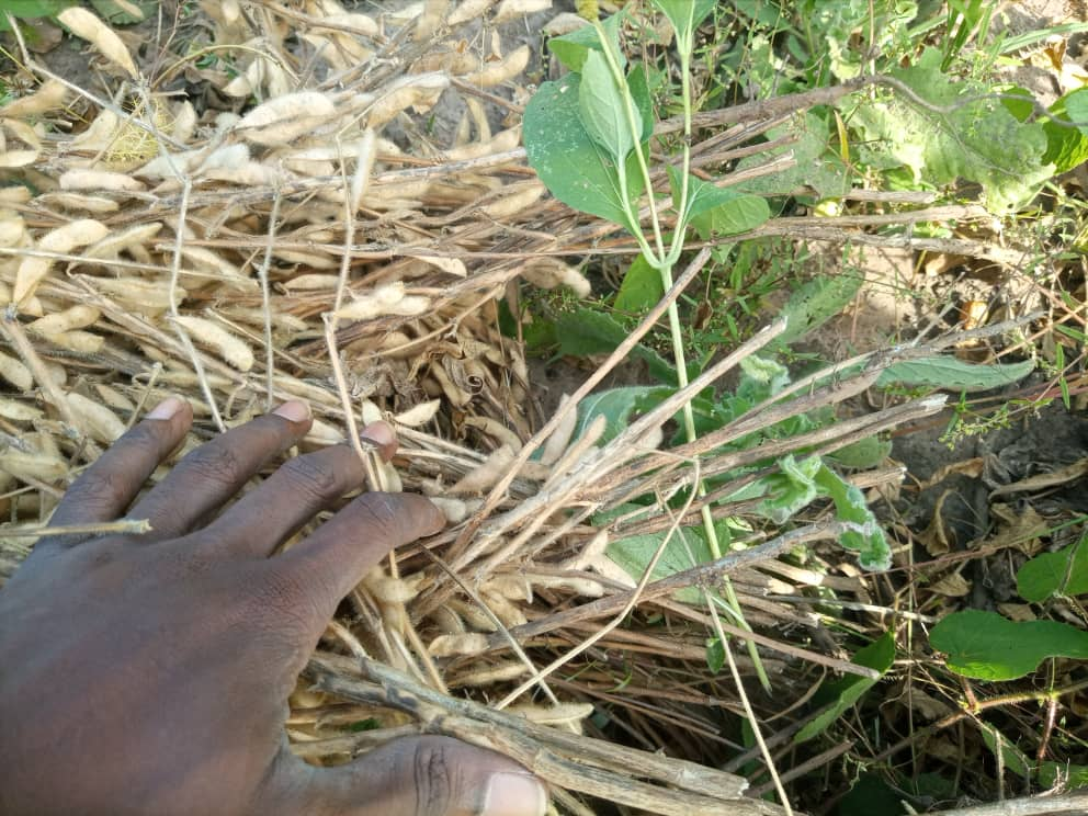 Bonnes pratiques agricoles
