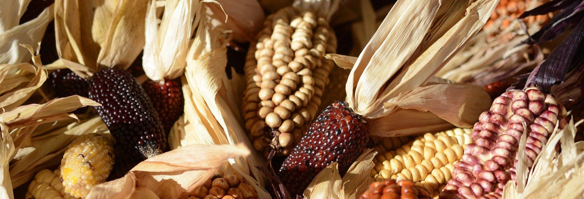 Revue des marchés du 29 Avril 2020 : La maïs