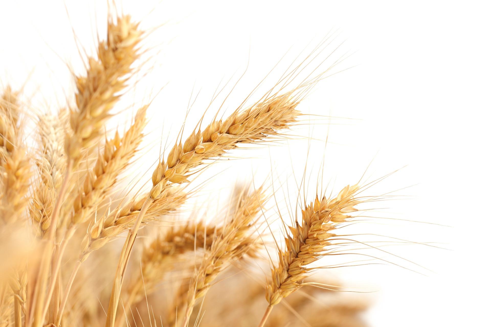 Revue des marchés du 29 Avril 2020 : Le blé