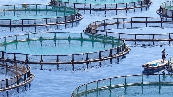 Pour le développement de l'aquaculture au Maroc, la FAO et le Ministère de l'agriculture du pays pilotent ensemble un projet à plus de 2,5 milliards de dollars
