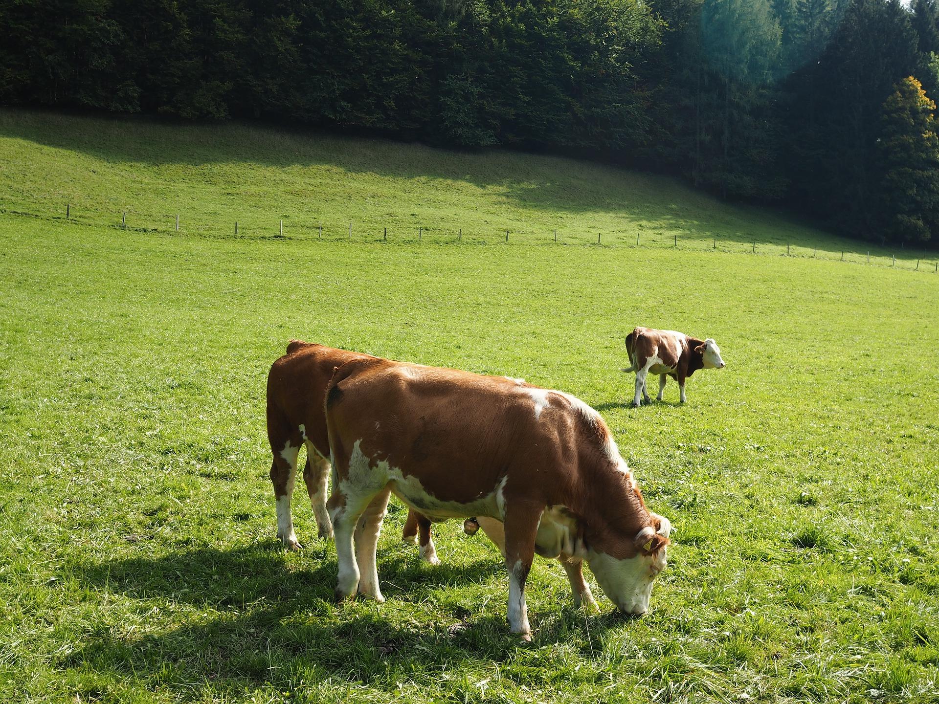 Revue des marchés du 7 Mai 2020 : Le bœuf