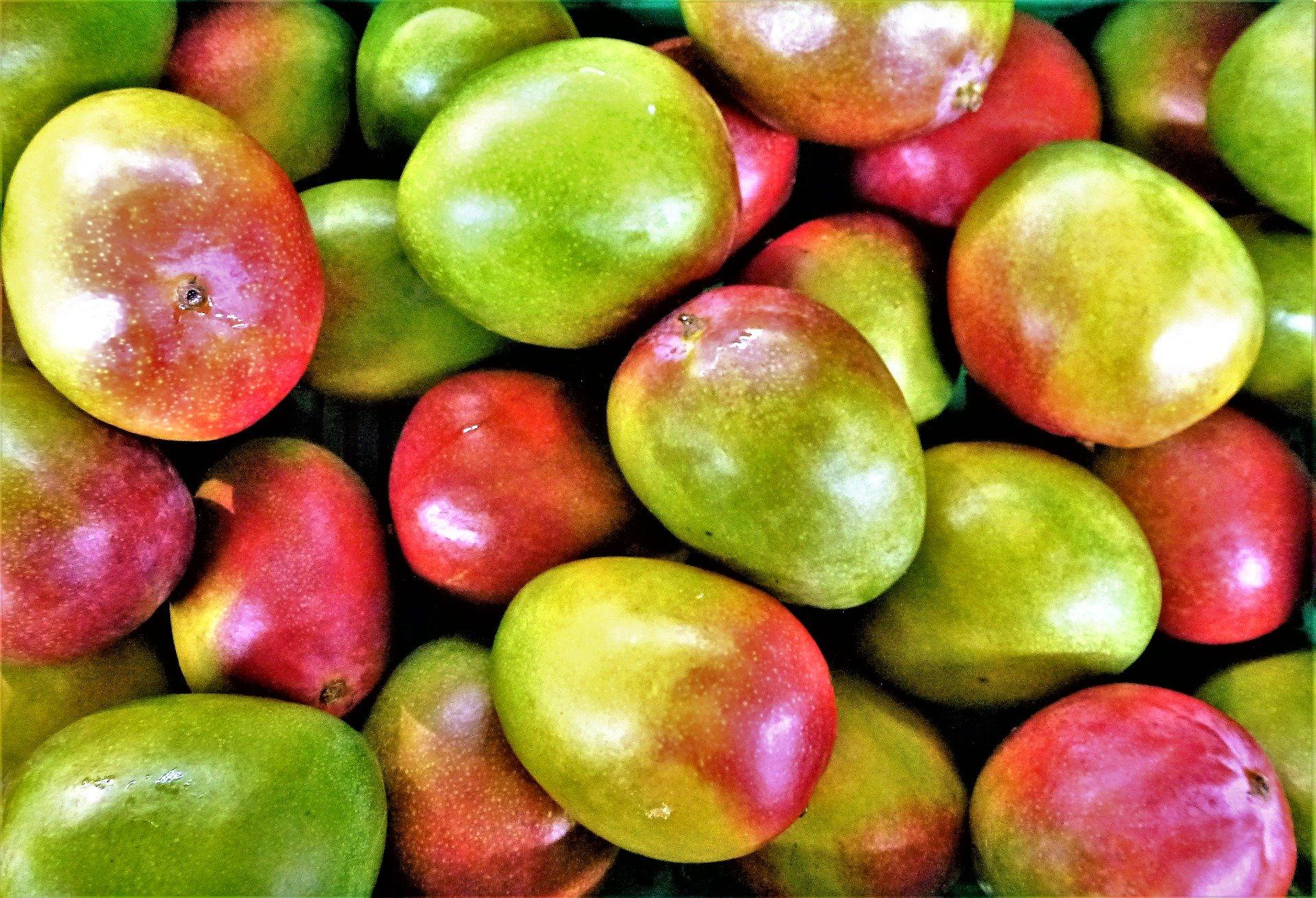 Les mangues ivoiriennes arrivent sur le marché européen