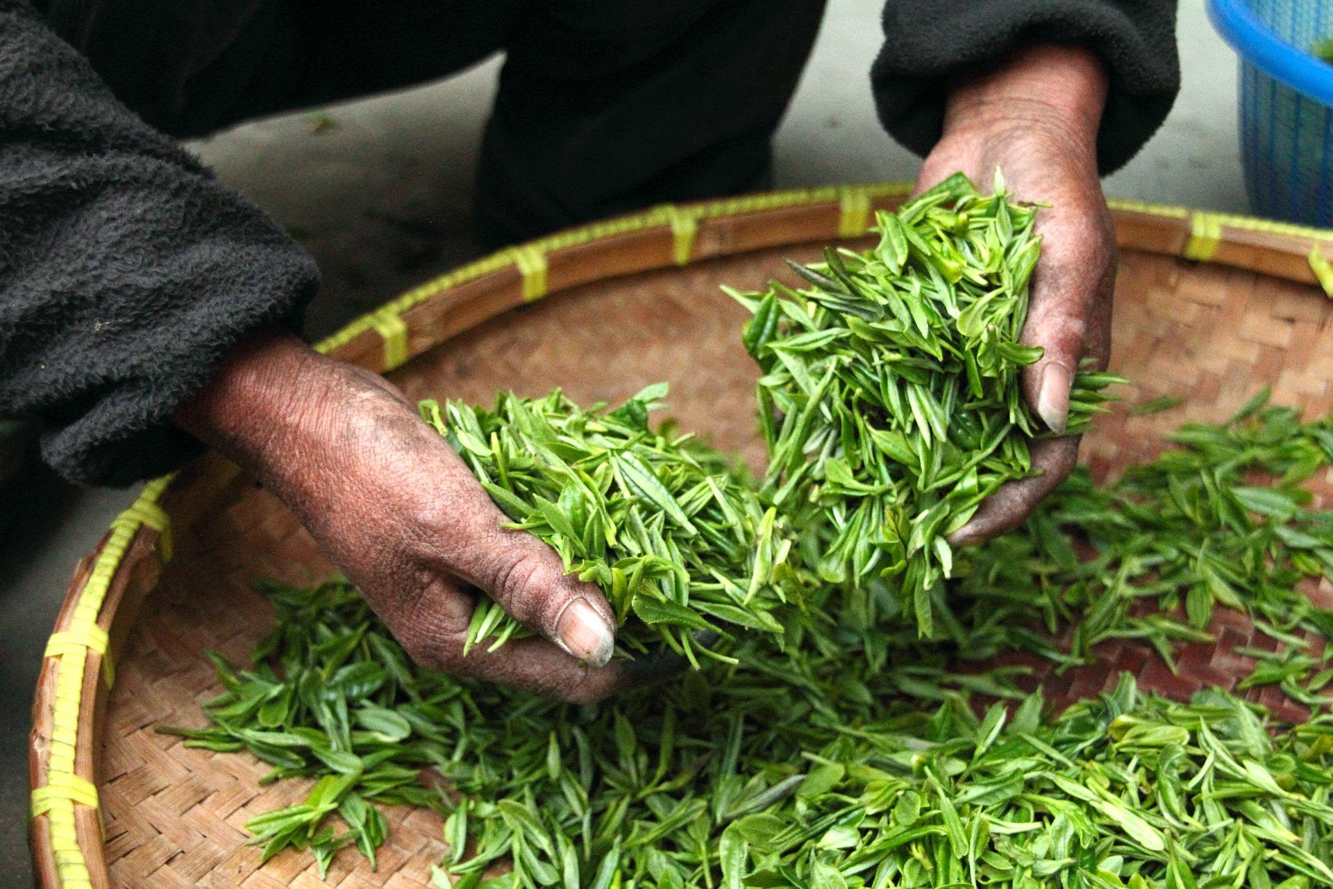 Le marché mondial du thé n'est pas épargné par la crise  liée au coronavirus