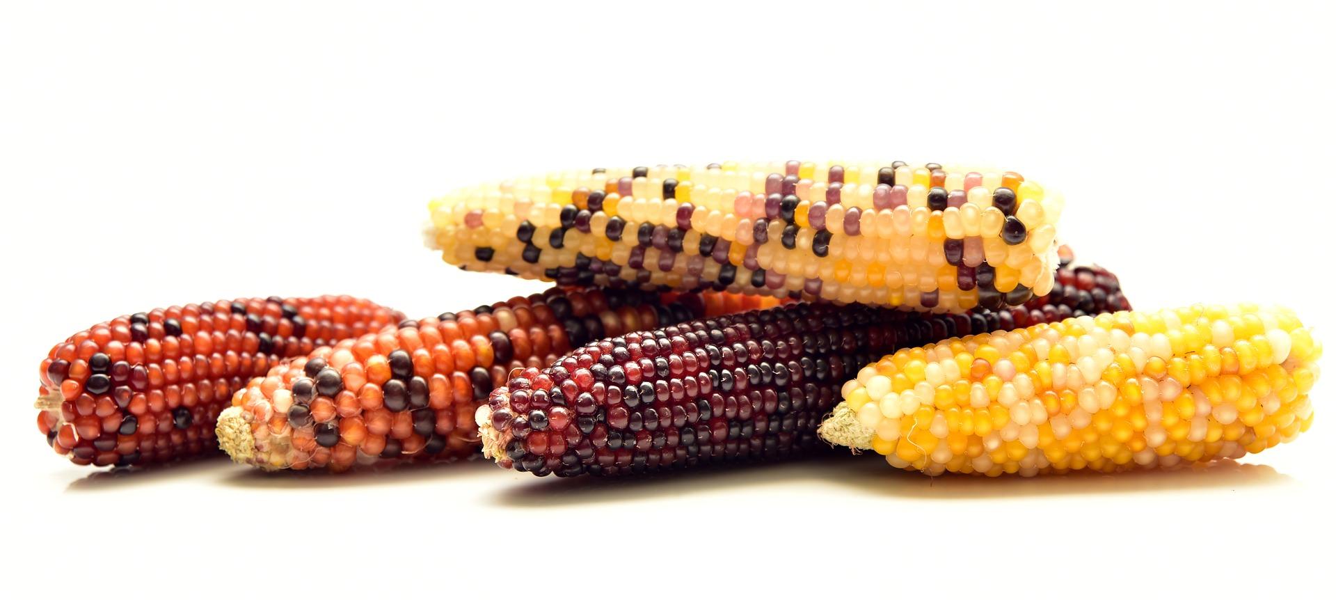 Revue des marchés du 15 Mai 2020 : Le maïs