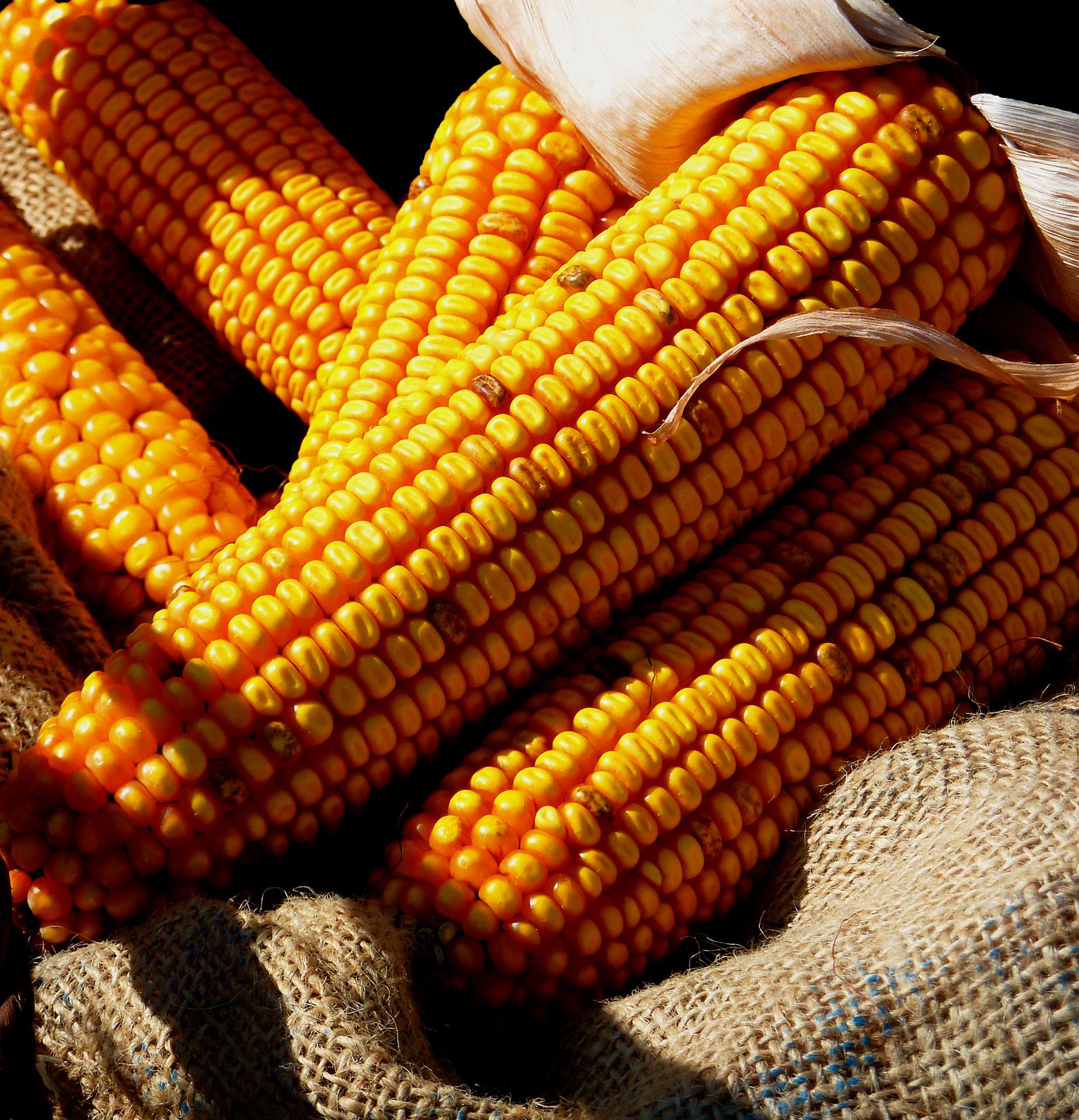 Revue des marchés du 12 Juin 2020 : Le maïs