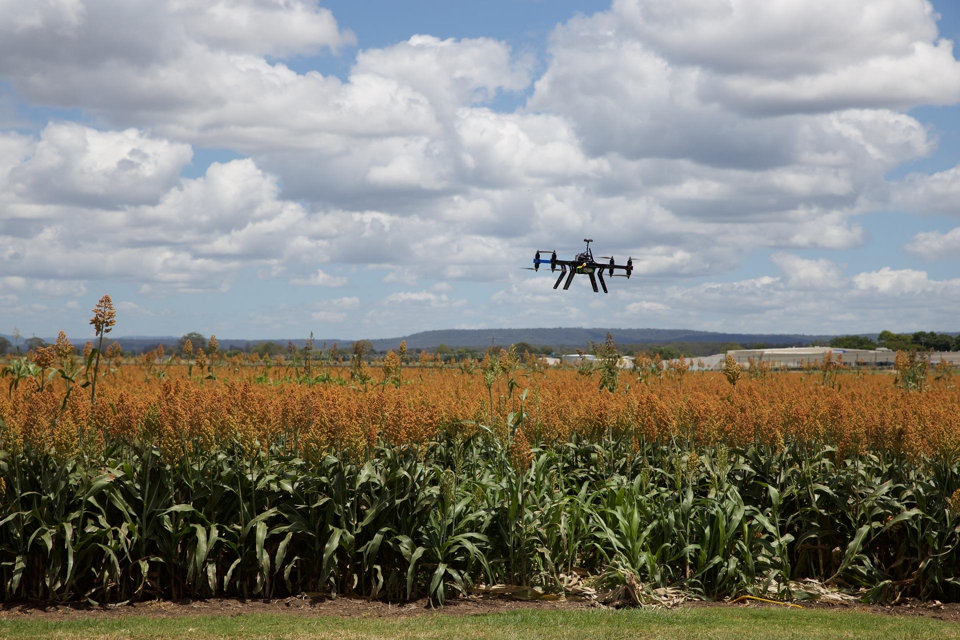 La GIZ lance les candidatures 2020 pour son programme de formation des start-up agricoles et agroalimentaires africaines