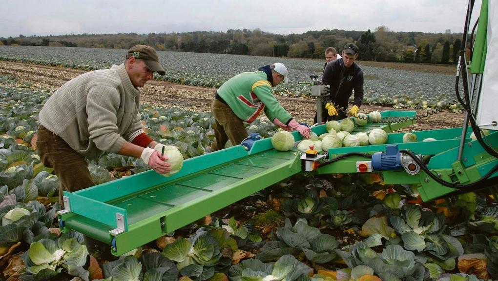 Malgré le Covid-19, l'Albanie autorise l'envoie de ses travailleurs agricoles saisonniers en Grèce