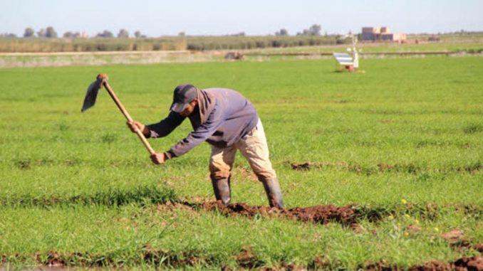 La Mutuelle agricole marocaine d'assurances (MAMDA) verse près de 200 millions de dirhams (MDH) à plus de 10.000 agriculteurs