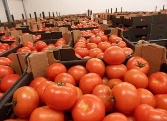 Une vidéo montrant des tomates en provenance du Maroc sur les rayons d'un supermarché en France fait jaser