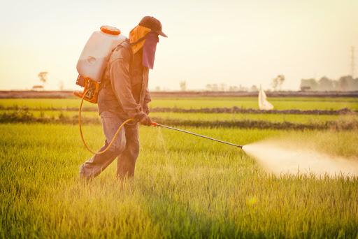 Office national de sécurité sanitaire des produits alimentaires du Maroc réexamine les autorisations des pesticides à base du Chlorpyriphos