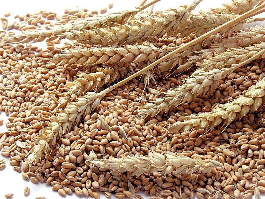 Les exportations de blé tendre de l'UE et de la Grande Bretagne s'envolent
