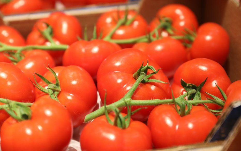 Le Maroc se classe 4ème dans le classement mondial des exportations de tomates