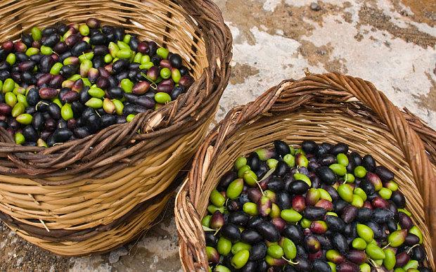 La part de marché des exportations d'olives de l'Espagne diminue de 40%