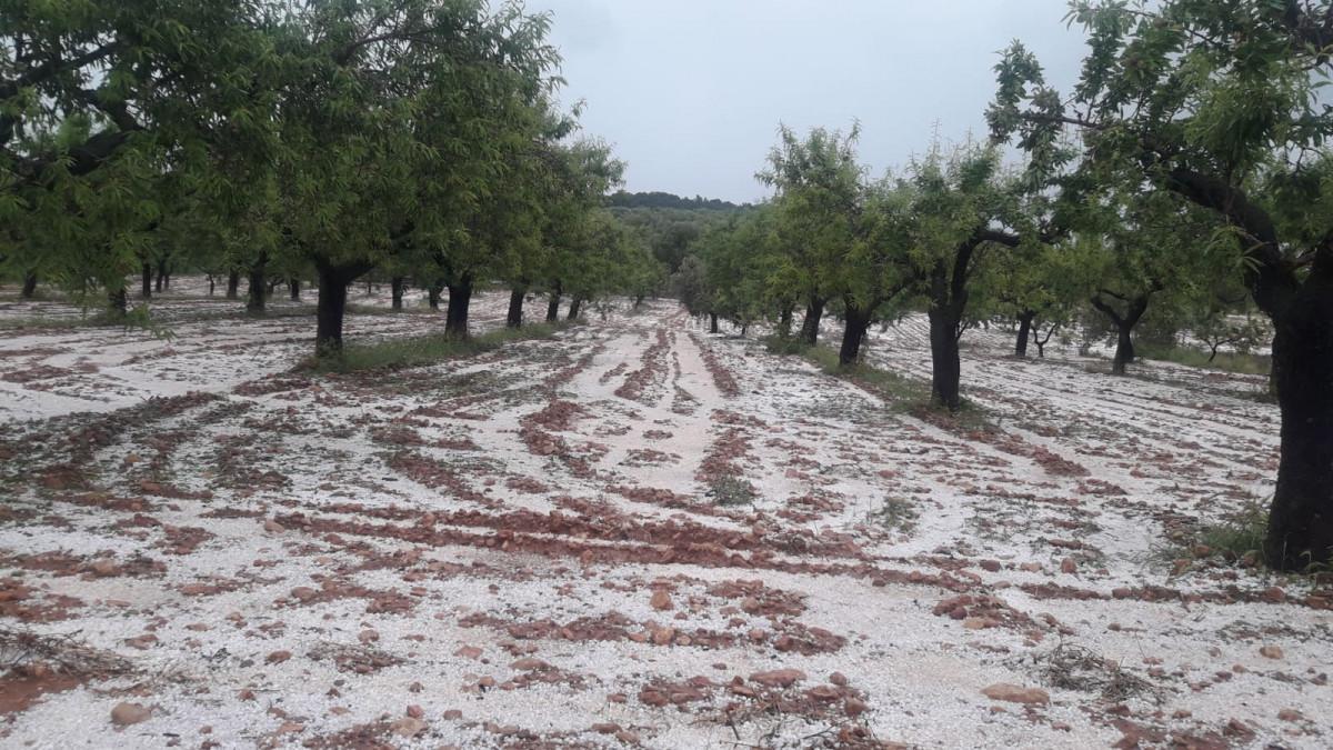 Une tempête de grêle a détruit plusieurs hectares de cultures en Espagne