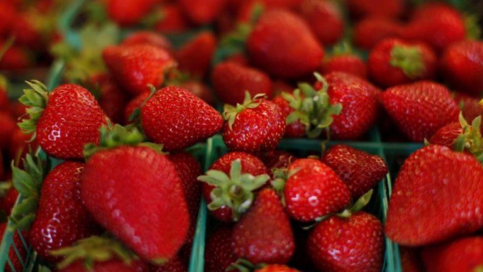 Le Maroc se retrouve dans le top 12 des principaux pays producteurs de fraises