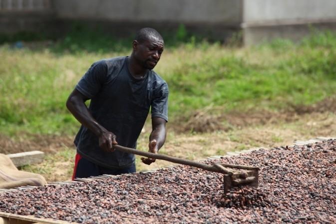 Fairtrade International soutient les producteurs de cacao à hauteur 3 millions d'euros