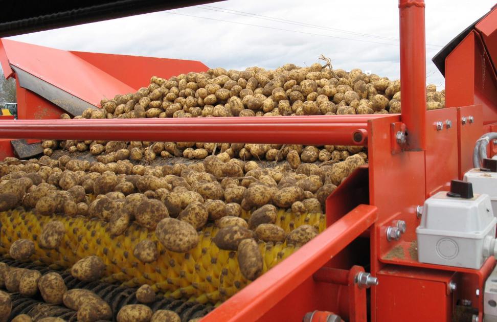 Les pommes de terre confrontées à l'accumulation de stocks en Europe