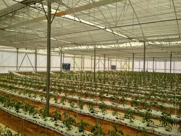 L'Egypte veut diversifier ses exportations à travers un projet horticole de 42.000 HA