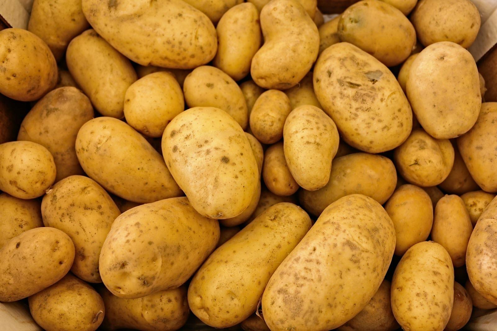 Les exportation de pommes de terre marocaines ont chuté