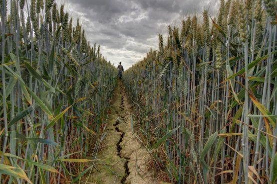 Après l'impact du Covid 19 sur la campagne agricole, c'est autour de la sécheresse d'entrer en scène au Maroc