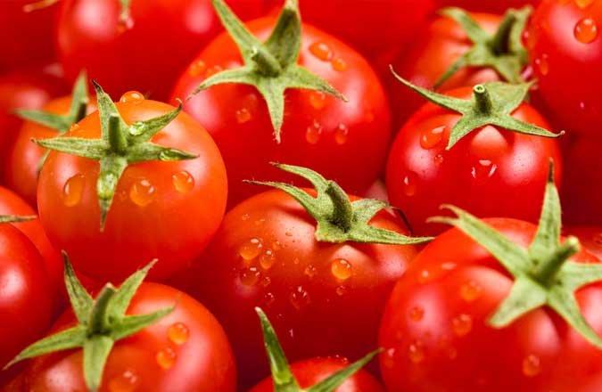 Les exportateurs de tomates turcs veulent une suppression du quota russe sur les tomates