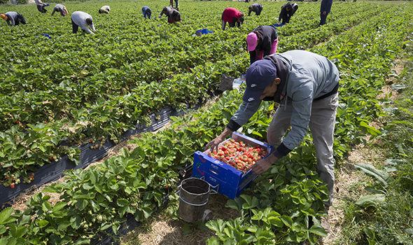 En Espagne, l'embauche des travailleurs saisonniers agricole est prolongée jusqu'au 30 Septembre
