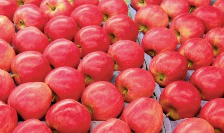 Les Pays-Bas ont rejeté un lot de pommes importées de Pologne contenant des résidus de chlorpyrifos