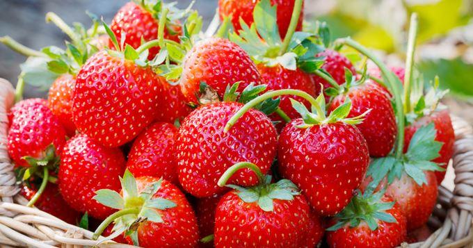 Le Maroc décroche la 6ème place dans les exportations de fraises vers l'UE